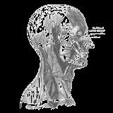 imagen para anatomía patológica