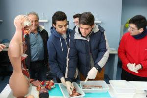 Práctica de anatomía patológica con órganos reales y muñeco