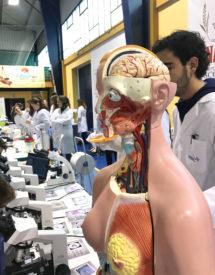 cuerpo humano muestra
